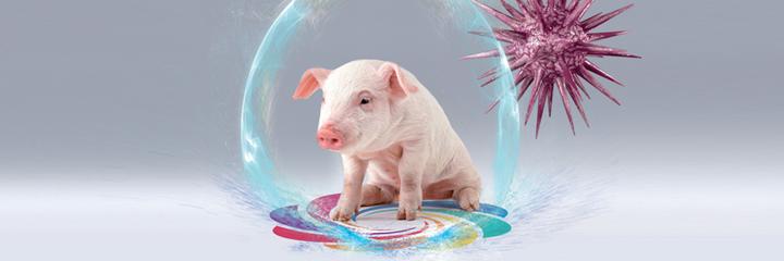Bannière hygiène porc